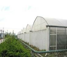Green House films with Wide width